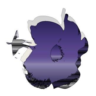 Serie Cayenas Púrpura